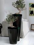 Коллекция Vases